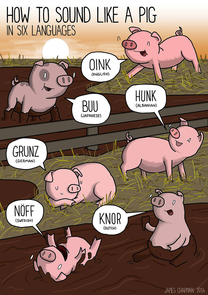 different-languages-expressions-illustrations-PIG